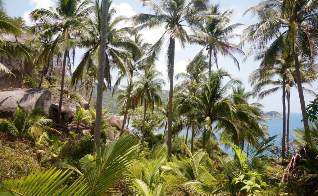 Koh Tao trees