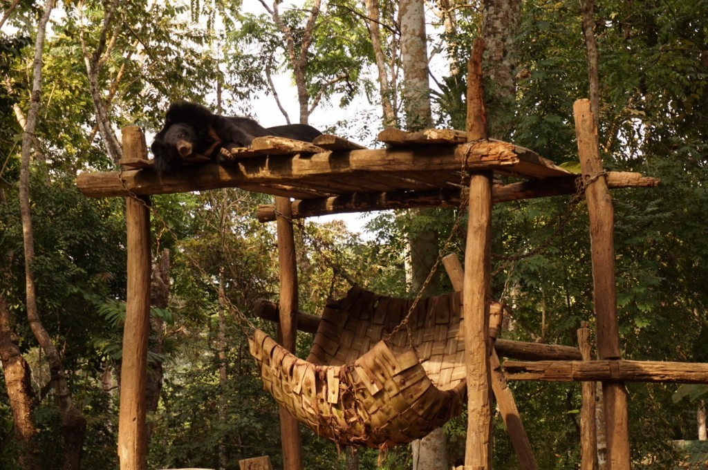 Bears rescue center