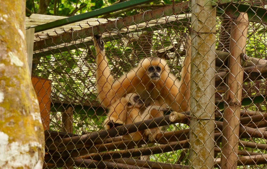 Cuc Phuong Primate Center