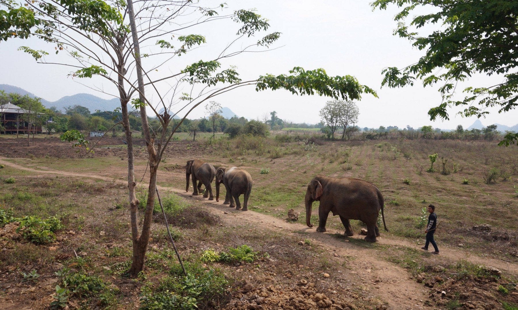 how to see elephants in thailand