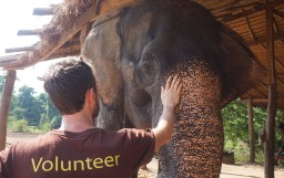 Volunteering at ElephantsWorld – a vegan's perspective