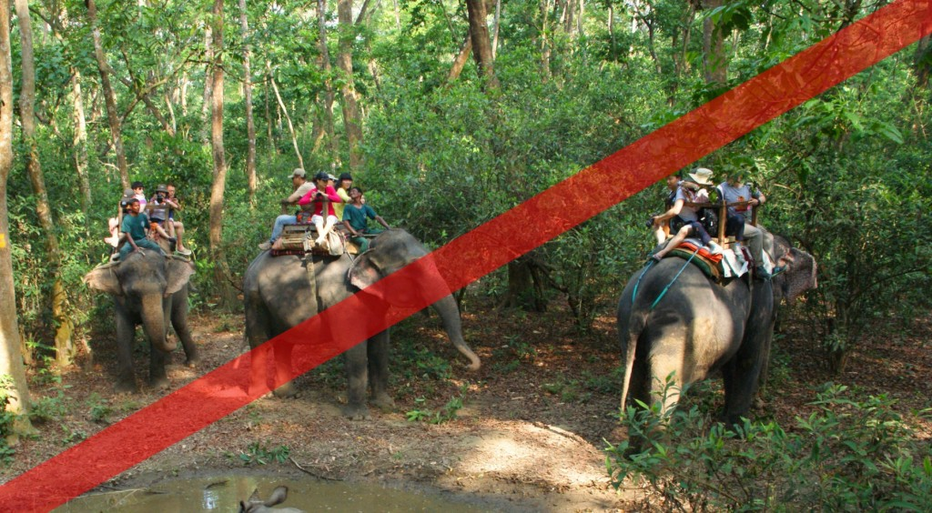 Abusing elephants - chair trek camp