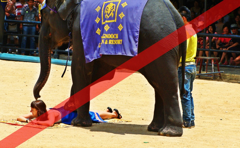 Abusing elephants - entertainment show