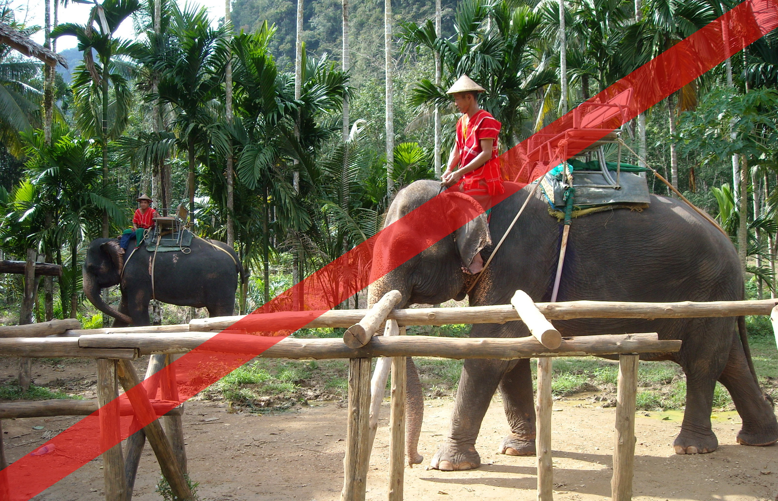 How to see elephants in the right way, without the abuse